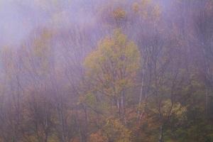 霧のホワイトロード