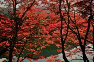 飛騨川ダム湖右岸