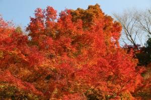 秋のパホーマンス