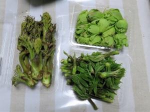 コシアブラ、タラの芽、蕗の薹