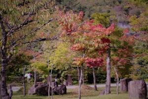 楓、桜の紅葉