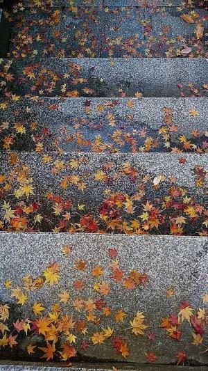 スマホで撮った寂光院の階段