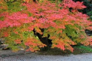 下呂市のモミジ寺玉龍時の紅葉