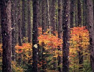 開田高原の林